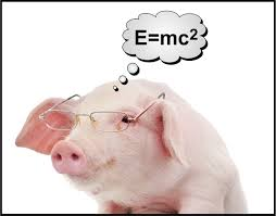 Pork … Do you eat fear? Or just bacon? … Food or Fear … What do youeat?